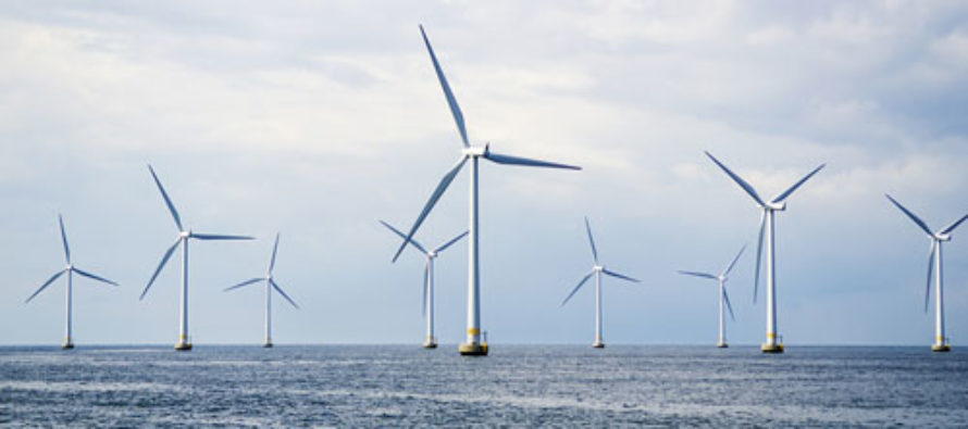 Wind Turbines Suspected of Killing Whale Family