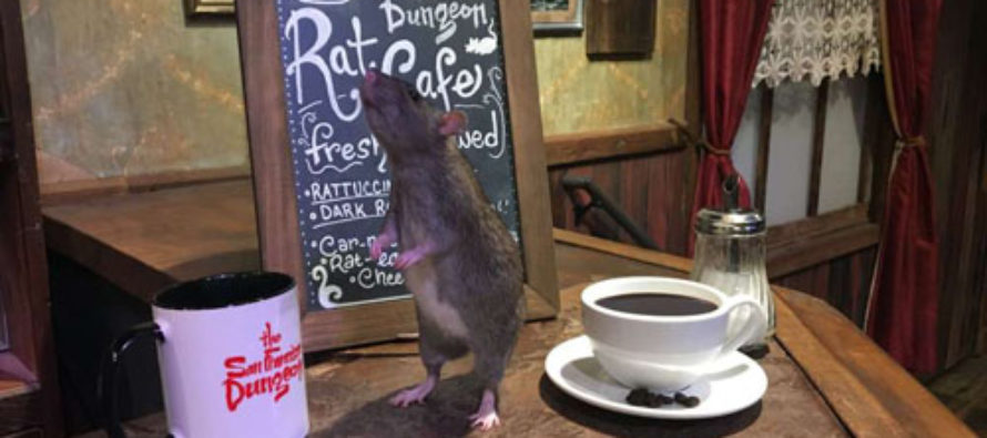 San Francisco's Rat Cafe