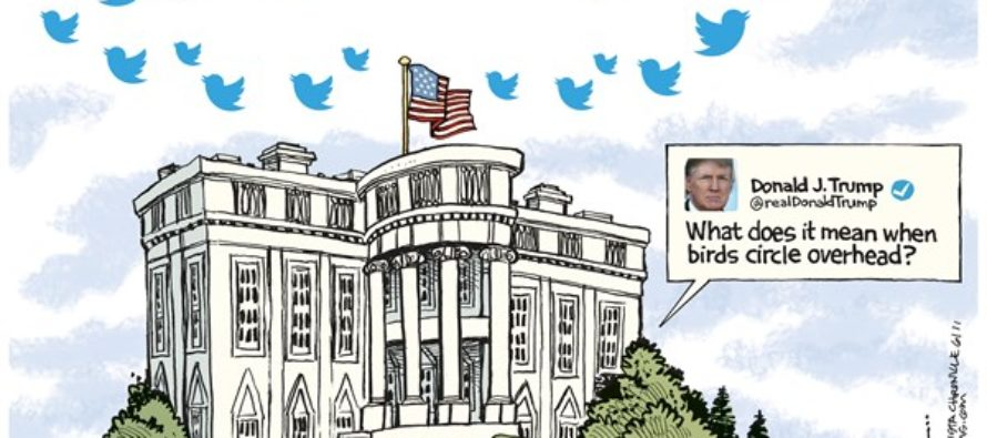 Tweet Buzzards (Cartoon)