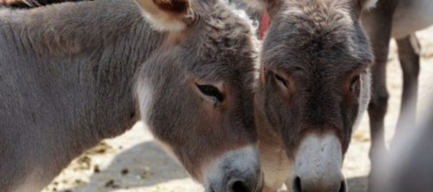 Seriously SICK Man Found Having 'Relations' With Donkey – Now Owner Demands 'Shot-Gun' Wedding?!