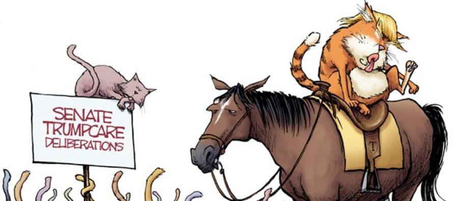 Cat Herder (Cartoon)