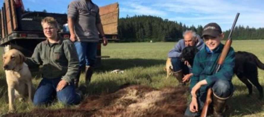 Courageous 11 Year-Old Boy From Alaska Saves His Family From Charging Bear With A Shotgun [VIDEO]