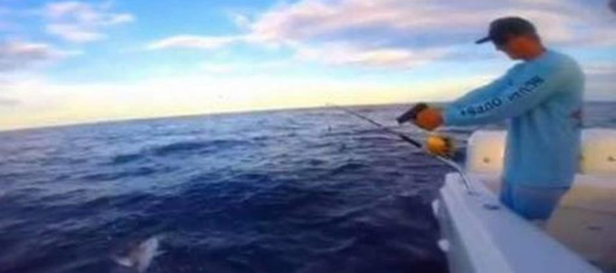 VIDEO: Men who tortured a shark posted other pics of animal abuse