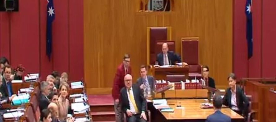 Parliament Jaws Drop as Pauline Hanson Walks In Senate Wearing A BURQA – She Wants Them BANNED [VIDEO]