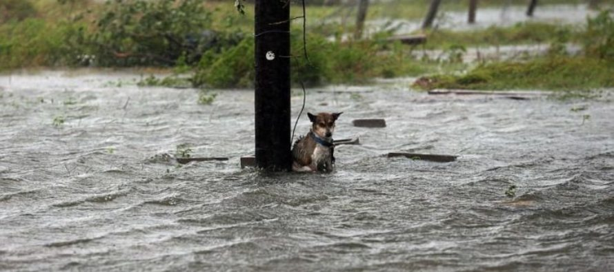Family Pets Tied Up And Left Alone To Face The Wrath Of Harvey – Images Going Viral [VIDEO]