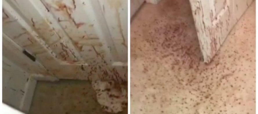 Family Returns Home to Disturbing Blood Spattered Walls, There Was an Intruder [VIDEO]