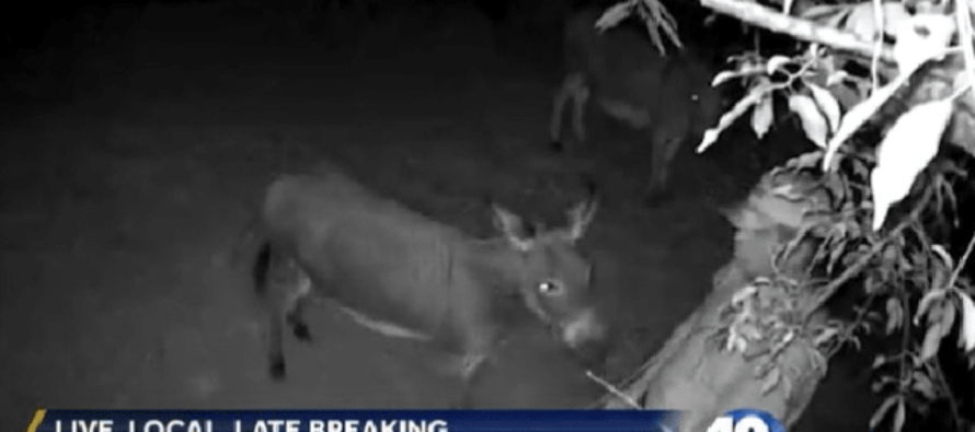 Arkansas Man Finds Himself Arrested After Sexually Molesting A Neighbor's Donkeys