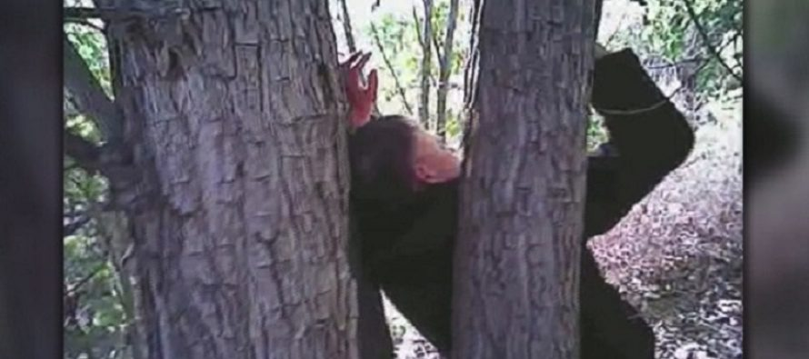 NOOO! Police Discover Victim With Both Hands Nailed To Tree – Then Learn Disturbing Reason [VIDEO]