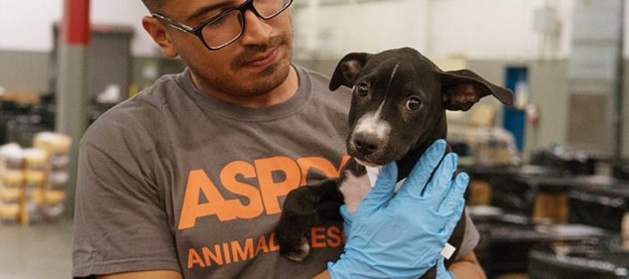 Florida: Anyone who abandoned their pets when fleeing Hurricane Irma May Face Felony Charges