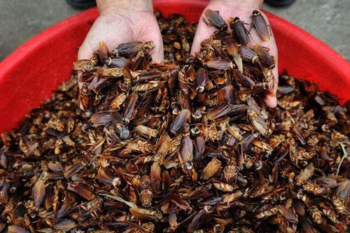 bucket-of-cockroaches