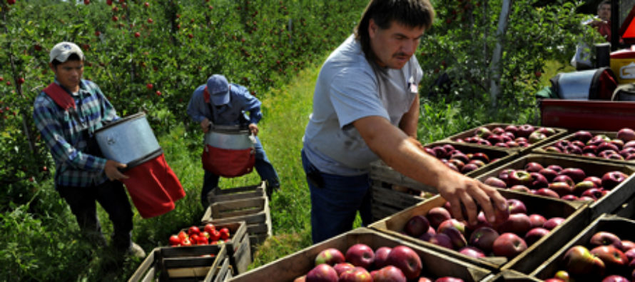 Bummer: Michigan Apple Growers Are Super Concerned Over Crackdown On Illegals