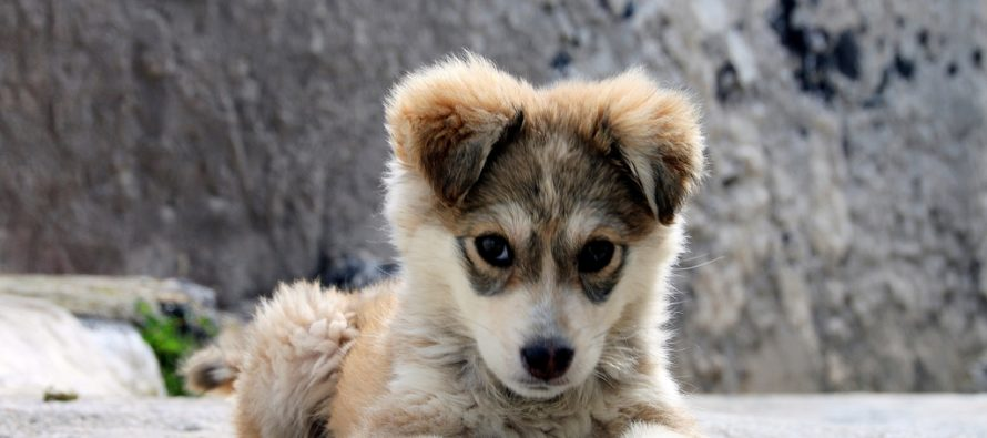 Center for Disease Control warns that cuddling puppies is making Americans sick
