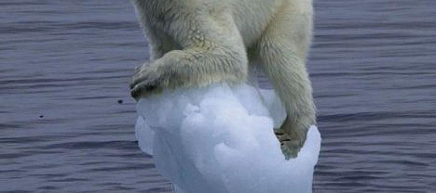 Polar Bears Lay Siege to Russian Village
