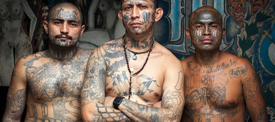 One-Third of 214 Arrested MS-13 Gangsters Were Part of Obama's 'Unaccompanied Alien Children' Policy [VIDEO]