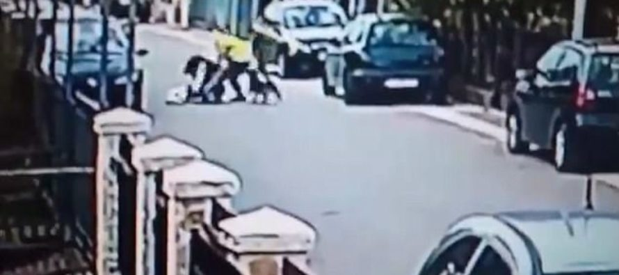 WATCH Heroic Stray Dog Springs Into Action To SAVE Woman From Being Attacked By Man – WINS!